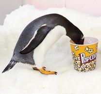 penguinpopcorn