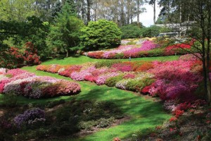 rhododendrongardens